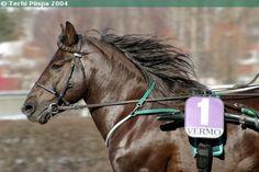 Finnhorse stallion Liptus Harness Racing, Beautiful Horses, Pony, Coaching, Animals, Pretty Horses, Pony Horse, Training, Animales