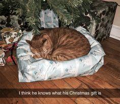"""""""Creo que sabe cuál es su regalo de Navidad"""""""