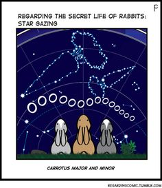 REGARDING THE SECRET LIFE OF RABBITS