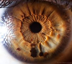 Human Eye - How cool does that look!  It would be interesting to see Tom Hiddleston or Benedict Cumberbatch's eyes but my boyfriend's eyes would be just as interesting. He has eyes like both of them!  I'm a lucky girl.....