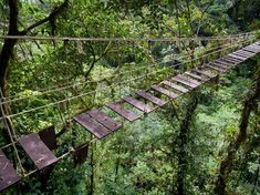 Ecuador rainforest | Ecuador To Sell A Third Of Its Amazon Rainforest To Chinese Oil ...