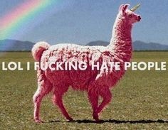Haha! I want a uni-llama! I can ride it and spear people I hate with her horn!
