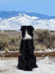 awesom shot...Photo-of-Angelo-by-Leland-Dirks-of-Fort-Garland-Colorado