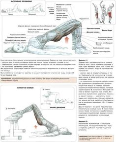 Упражнения для ягодиц и задней поверхности бедра