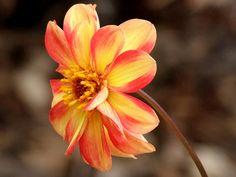 https://flic.kr/p/7QAnoi | flower | flower