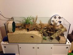 I like the plant decor Hamster Live, Cool Hamster Cages, Gerbil Cages, Hamster Habitat, Syrian Hamster Cages, Cage Hamster Russe, Funny Hamsters, Robo Dwarf Hamsters, Animals