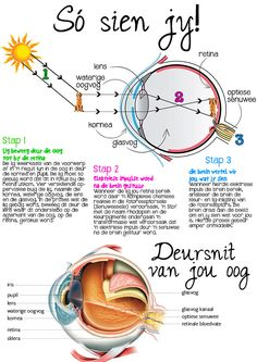 oog hoezit sien kyk Science Biology, Science Fair, Science For Kids, Activities For Kids, Curriculum, Homeschool, 9 Year Olds, Afrikaans, Kids Education