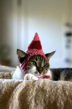 This elf hat fits me purrr-fectly! #christmas #cats