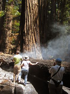 Impact of Humans on Forest Spans Thousands of Years. http://blog.savetheredwoods.org/category/wonders/