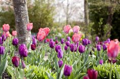 How to plant spring bulbs
