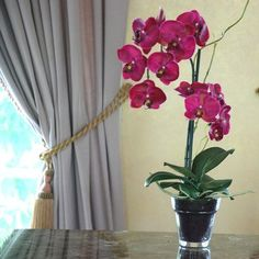 Jane Seymour Phalaenopsis Orchid 19H in. Silk Flower Arrangement $65.60
