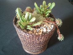 Living succulents garden in a woven basket by UrbanSucculent, $65.00