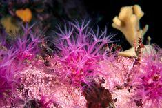 https://flic.kr/p/Bc6oKx | Cold water soft corals