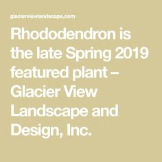 Rhododendron is the late Spring 2019 featured plant – Glacier View Landscape and Design, Inc. Drip System, Spring Plants, Peat Moss, Boulder Colorado, Landscape, Garden, Design, Scenery, Garten
