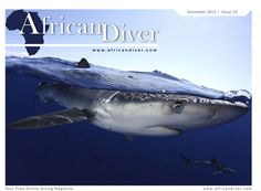 Best Underwater Photographer of the Year Competition: Stunning image of mako shark wins top award Underwater Photographer, Underwater Photos, Epic Photos, Deep Blue Sea, Ocean Creatures, The Beautiful Country, Zoology, Under The Sea, Pet Portraits