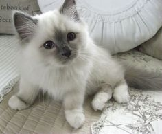 Shabby Chic Inspired: cats