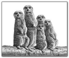 meerkat-print-picture-wildlife-animal-wall-art-pencil-drawing-poster-b-w-meercat