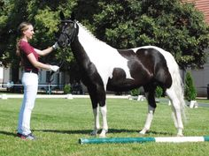 Mary Ann - Lewitzer mare