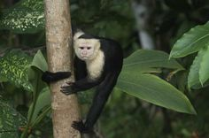 Madidi National Park: a treasure in biodiversity - Bolivia Travel