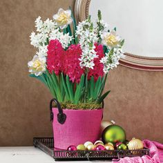 Joyful Blooms Bulb Garden: A Festive Blend Of Delightful Seasonal Colors,  This Bulb Garden Offers A Wealth Of Gorgeous Blooms In A Variety Of Sizesu2026