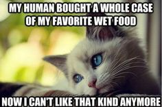 the struggle is real 26 things every cat owner goes through 18