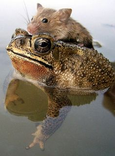 """Also seen on Frog-Blog Board. Pinned here by suggestion... """"Magically Convenient Transformation"""""""