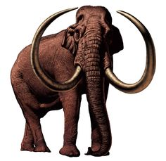Columbian Mammoth - Wooly Mammoth and Dinosaur Wall Graphics and Wall murals are perfect kids decor for kids rooms!