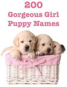 Female Dog Names - Hundreds of Gorgeous Girl Puppy Names 200 Girl Puppy Names Best Female Dog Names, Puppies Names Female, Best Dog Names, Cute Female Puppy Names, Unusual Female Dog Names, Cute Girl Dog Names, Funny Dog Names, Cute Names For Dogs, Yorkie Names Girl