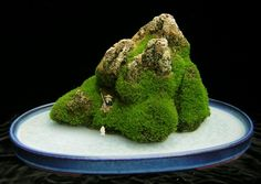 rock - bonsai