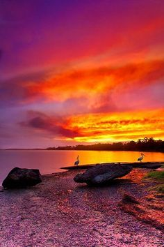 Shoalhaven River Sunset, New South Wales, Australia--Fire in the sky Pretty Pictures, Cool Photos, Beautiful World, Beautiful Places, Amazing Places, Wonderful Places, Amazing Sunsets, All Nature, Amazing Nature