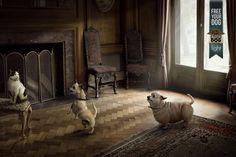 MasterDog Fat Dog and Cat