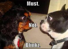 Who will win? #dogsfunny #funnydogspics #dogsfunnyfaces #funnydogsquotes