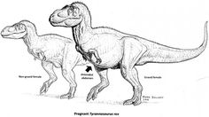 Scientists hope further analysis of a pregnant T. rex fossil can illuminate the evolution of egg laying in modern birds. All Dinosaurs, Dinosaur Drawing, Dinosaur Art, Dinosaur Fossils, Tyrannosaurus Rex, Prehistoric Animals, Prehistory, Step By Step Drawing, T Rex