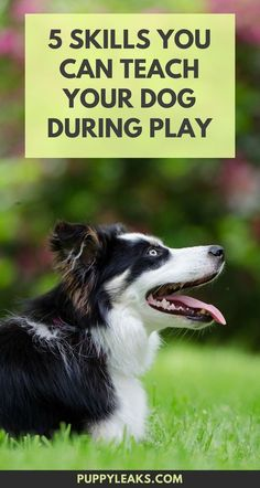 5 skills you can teach your dog during play.