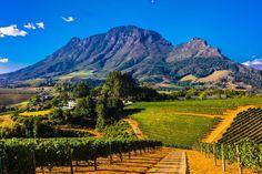 Au cœur de paysages grandioses, dans la région duCap, la route des vins…