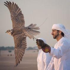 Parties   Illustration   Description   9/17/14 Preparing/training for 2014 falconry season PHOTO:aj6544    – Read More –