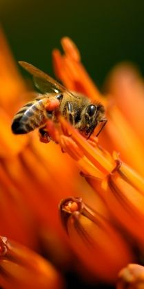 | Call A1 Bee Specialists in Bloomfield Hills, MI today at (248) 467-4849 to schedule an appointment if you've got a stinging insect problem around your house or place of business! You can also visit www.a1beespecialists.com!