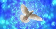 Free Image on Pixabay - Dove, Flight, Flying, Bokeh John 20 19, Free Pictures, Free Images, Acts 1 8, Romans 10 9, Parts Of The Earth, Jesus Return, Jesus Resurrection, Church Building