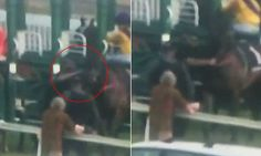 Barrier attendant videoed punching a racehorse in Tasmania | Daily Mail Online