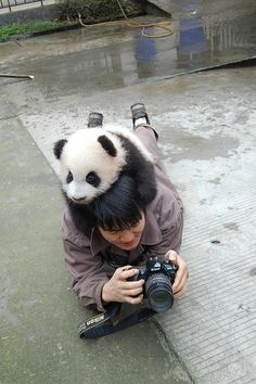Attack of the cute panda!