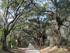 Located about 18 miles northeast of Kiawah, Johns Island is home to beautiful beaches, dozens of wildlife species and hundreds of majestic live oaks. >> www.frontdoor.com/buy/kiawah-island-surrounding-sights-and-scenery/pictures/pg674?soc=dhpp