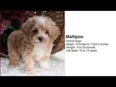More Little Dogs Cute Video TOP 10 Images: Video Compilation 2015 - YouTube