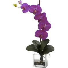 Nearly Natural Giant Phal Orchid w/Vase Arrangement (80 CAD) ❤ liked on Polyvore featuring home, home decor, floral decor, flowers, plants, fillers, plants/flowers, flower stems, flower planters and nearly natural