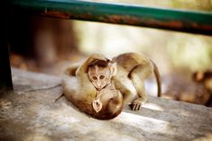 Monkeys in Mumbai - this is such a cute pic!