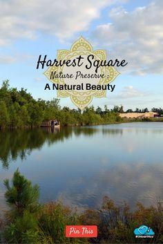 Harvest Square Nature Preserve: a Natural Beauty