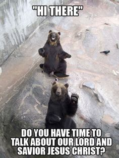 O Hai Bear - Squee daily at these cute animals and the absolute cutest animal pics and gifs ever known to man. Beautiful Creatures, Animals Beautiful, Beautiful People, Animal Pictures, Funny Pictures, Funny Animals, Cute Animals, Wild Animals, Crazy Animals