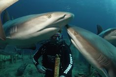 Stuart Cove's - Nassau, The Bahamas : 21 Hottest Caribbean Escapes : TravelChannel.com