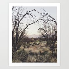 Buy Coyote Canopy by Kevin Russ as a high quality Art Print. Worldwide shipping available at Society6.com. Just one of millions of products available.