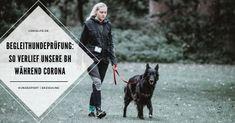 LokisLife   Hundeblog LokisLife   Hundeblog - Ein deutschsprachiger Blog über das Leben mit einem Hund aus dem Auslandstierschutz. Leser finden hier unter anderem DIYs, Literaturtipps, Produkttests, Empfehlungen und Tipps zur Hundeerziehung. Diese Dinge müsst ihr und euer Hund können, um die Begleithundeprüfung zu bestehen. Lest hier, wie unsere BH und Coronabedingungen ablief. Der Beitrag Begleithundeprüfung unter Corona-Bedingungen: Das muss euer Hund können und so verlief unsere Prüfung ersch Animals, Corona, Dog Training Tips, Cat Food, Animal Welfare, Bra Tops, Hang In There, Life, Animales