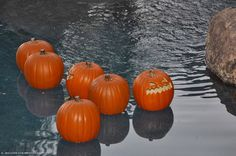 Did you know jack-o'-lanterns float? Check out this great #pool party idea for #Halloween
